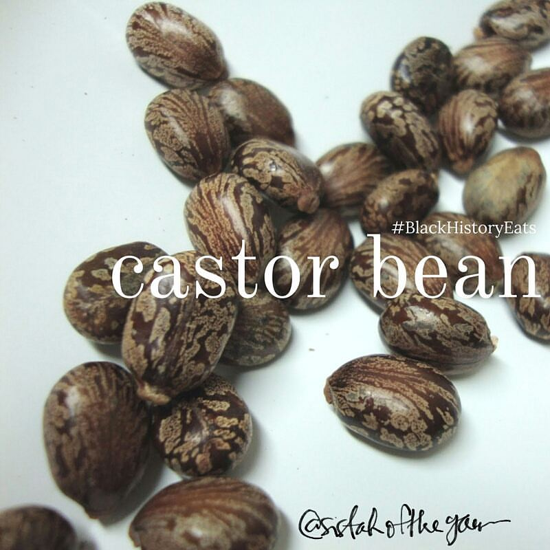 castor-bean